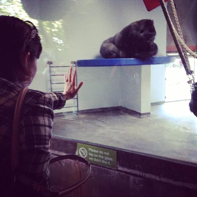 My friend, sending good vibes to a Gorilla.