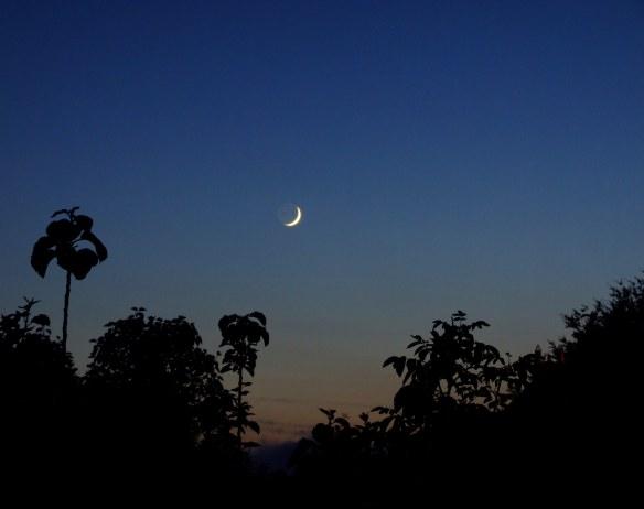 Crescent_Moon_(2558144570)
